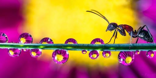 Princeton Photo Workshop: Macro Water Droplet Workshop with Don Komarechka