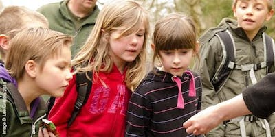 Forest Fridays at Bubbenhall Wood - Bug Hunting