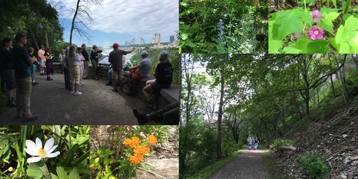Invasive Plants of the Niagara Gorge
