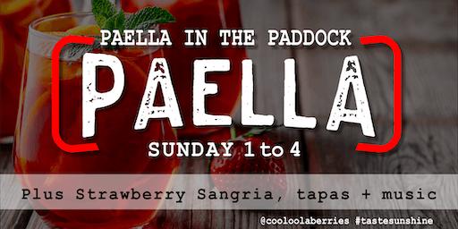 Paella in the Paddock