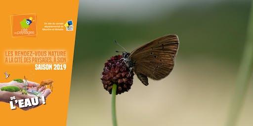 Sortie nature: un papillon rare.