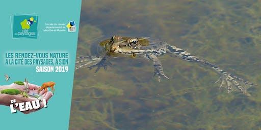 Atelier nature: Les petites bêtes de l'eau (accès libre)