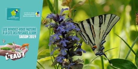 Animation nature: Indispensables papillons (accès libre). billets