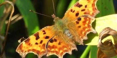 Butterfly field surveying