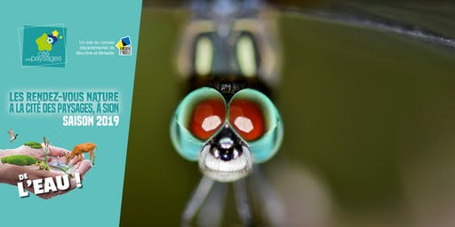 Atelier créatif: Les libellules.(accès libre)