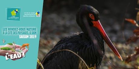 Animation nature: La cigogne noire (accès libre) billets