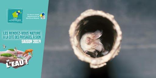 Animation nature: Le monde des chauves-souris.