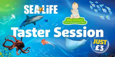 Sensory at SEA LIFE: Baby Sensory Taster Session
