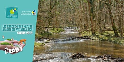 Atelier sur les milieux humides (accès libre)