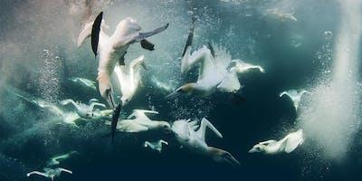 ISF 2019 - Protecting Scotland's amazing marine life
