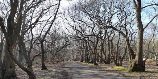 British Nordic Walking Exel Challenge Event : Burnham Beeches, Farnham Common