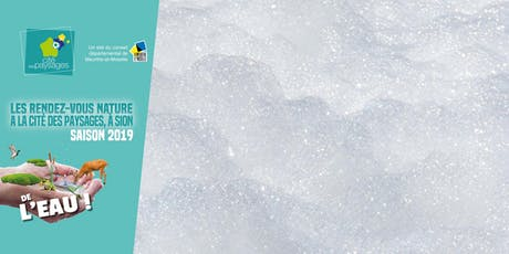 Atelier: Fabriquer une lessive à base de lierre. billets