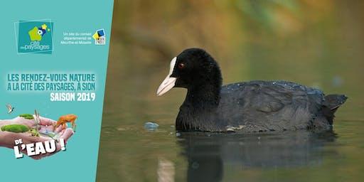 Animation nature: Les oiseaux d'eau.