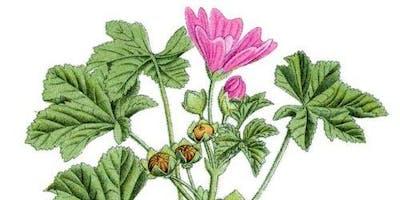 le erbe alimurgiche