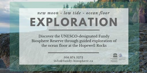 Low Tide Exploration