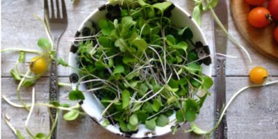 La germination, pas que des grains et des bocaux!