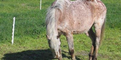 Beginner's Workshop: Temporary Fence for Livestock (Kent County)