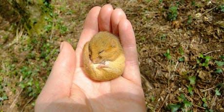 Dormouse Ecology & Conservation - Basildon Park, Reading  tickets