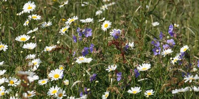 Meadow Management at Holywells Park (EWC2806)