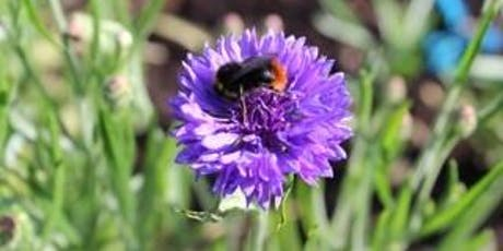 Bee Aware - Open Day at Botanika tickets