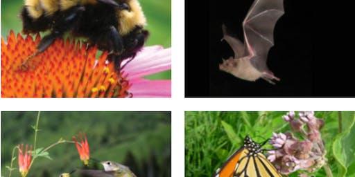 Pollinator Gardening 101 (Free event, limit 30 participants)