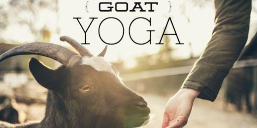 Goat Yoga at Black Ridge Farms