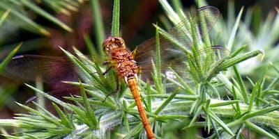 Dynamic Dragonflies