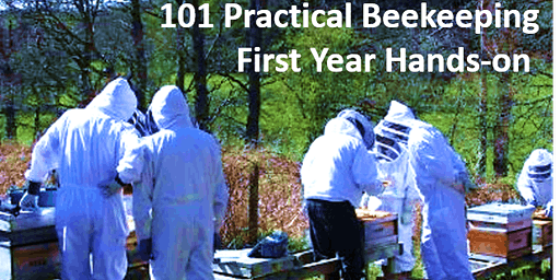 Practical Hands-on Beginning Beekeeping 101 (short course is a prerequisite)
