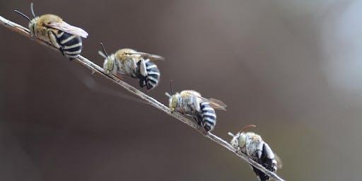 Native Bee Habitat Workshop - June