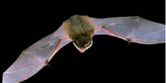 Bat walk Leybourne