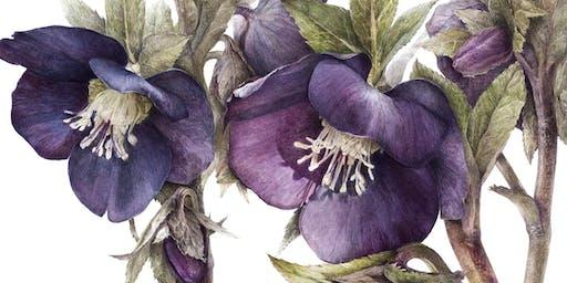 Dark Secrets: creating rich and interesting botanicals with Elaine Searle SBA