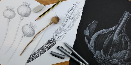 An Introduction to Botanical Art with Julia Trickey SBA, RHS gold medallist