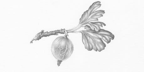 BOTANICAL DRAWING FOR BEGINNERS With Penny Brown	  tickets