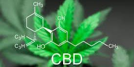Benefits Of CBD - Seminar