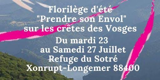 """Intensif DMLV """"Prendre son envol sur les crêtes des Vosges"""""""