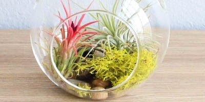 Plant Terrarium @ Belle Haven