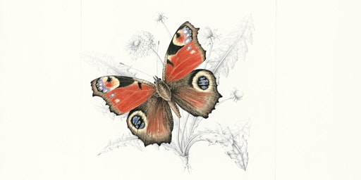 EXPLORING THE BEAUTY OF BUTTERFLIES With Mary Ellen Taylor