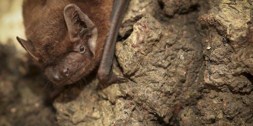 Dunsmore: Brilliant Bats