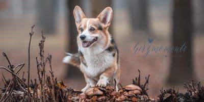 WORKSHOP Outdoor-Hundefotografie für EINSTEIGER