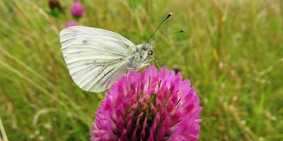 Drop-in Session - Butterflies