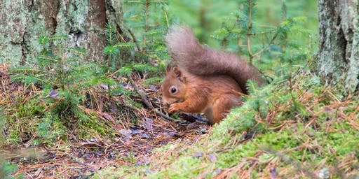 Silent Squirrel Spotting Safari