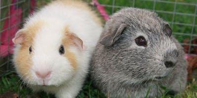 Pet Health & Wellbeing Checks - Yaxley