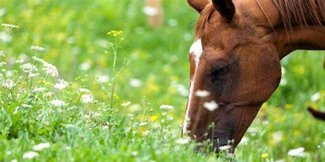 Landscaping for Livestock