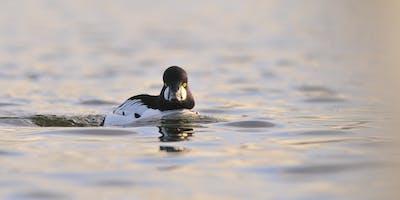 Winter bird ID at Lackford Lakes (EWC2806)