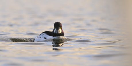 Winter bird ID at Lackford Lakes (EWC2806) tickets