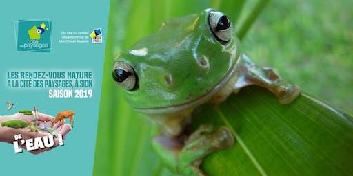 """Spectacle: """"Côa"""" histoires de grenouilles, par Chantal Kahl."""