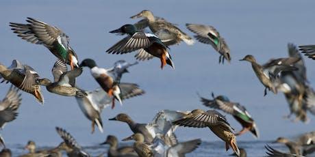 Autumn bird ID at Lackford Lakes (EWC2806) tickets