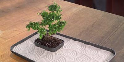 Bonsai Zen Garden Workshop (Just in time for Father's Day!)