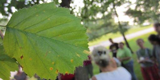 Annual Herb Walk