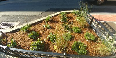 DIY Garden Planting Design